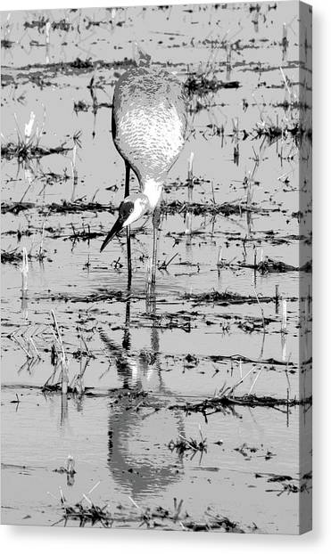 Grus Canadensis 2 Canvas Print