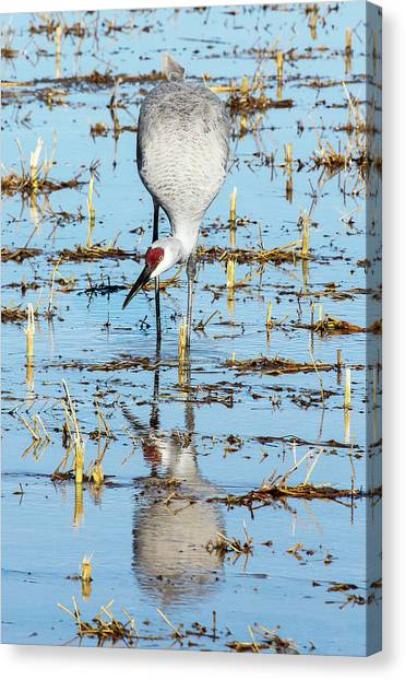Grus Canadensis I Canvas Print