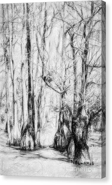Great Dismal Canvas Print - Guardians Of The Cypress Swamp Ap by Dan Carmichael