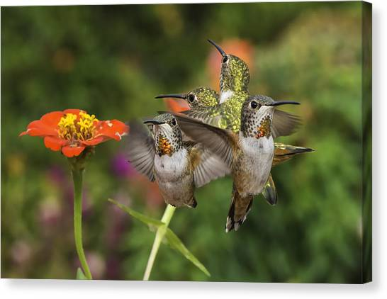 Mcherdering Canvas Print - Guarding The Zinnia by Mike Herdering