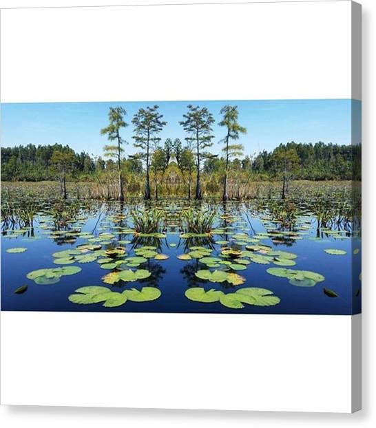 Okefenokee Canvas Print - Guess Who Discovered The Mirror Effect by Karen Breeze