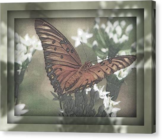 Gulf Fritillary Behind The Screen Canvas Print by Dottie Dees