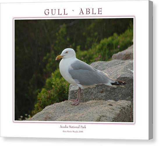 Gull Able Canvas Print by Peter Muzyka