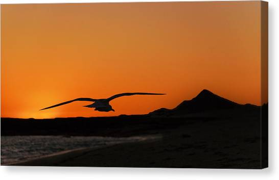 Ocean Sunrises Canvas Print - Gull At Sunset by Dave Dilli