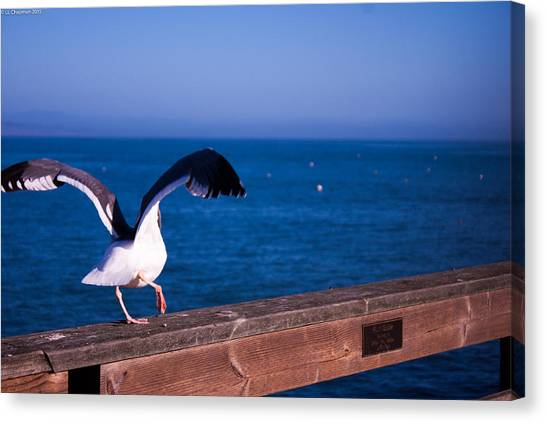 Gull Dance Canvas Print
