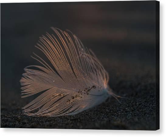 Gull Feather On A Beach Canvas Print