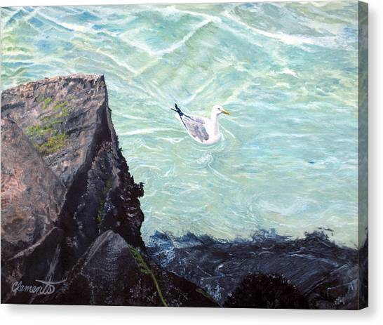 Gull In Shallows Of Barnegat Inlet Canvas Print