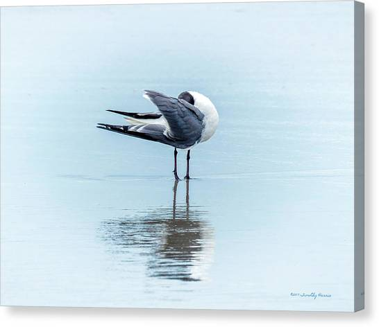 Gull Reflection Canvas Print