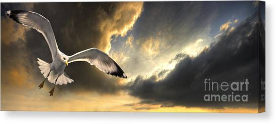 Scavenger Canvas Print - Gull With Approaching Storm by Meirion Matthias