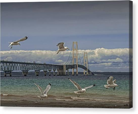 Gulls Flying By The Bridge At The Straits Of Mackinac Canvas Print