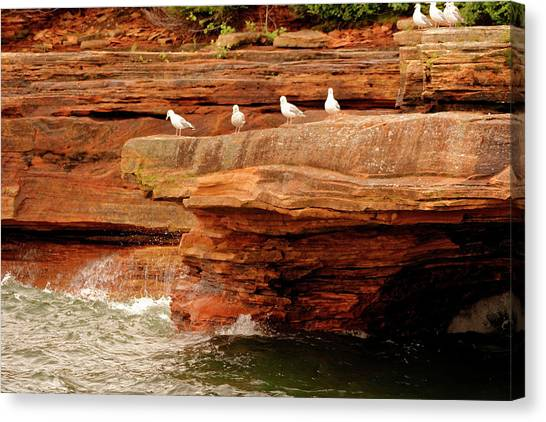 Gulls On Outcropping Canvas Print