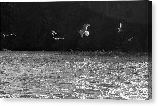 Gulls On The River Canvas Print