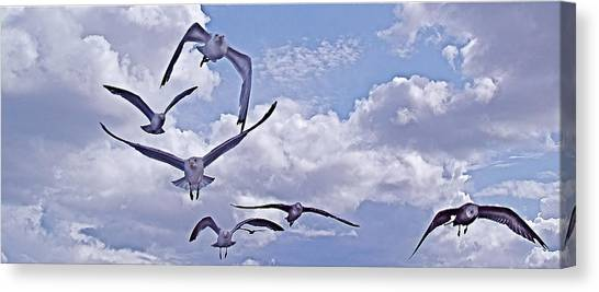 Gulls Will Be Gulls Canvas Print by Mike Shepley DA Edin