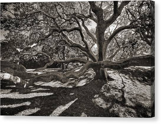 Gumbo Canvas Print - Gumbo Limbo by HH Photography of Florida