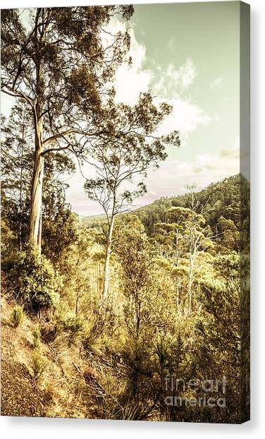 Canvas Print featuring the photograph Gumtree Bushland by Jorgo Photography - Wall Art Gallery