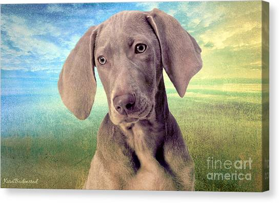 Gunshy Weimaraner Looking For Loving Home Canvas Print