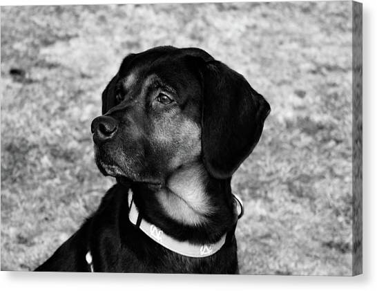 Gus - Black And White Canvas Print