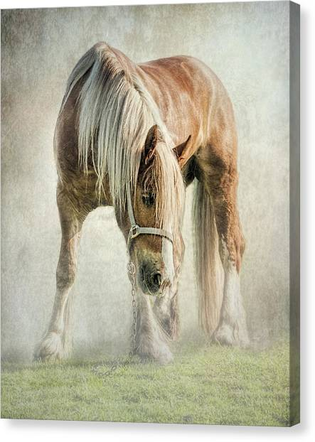 Gypsy In Morning Mist. Canvas Print