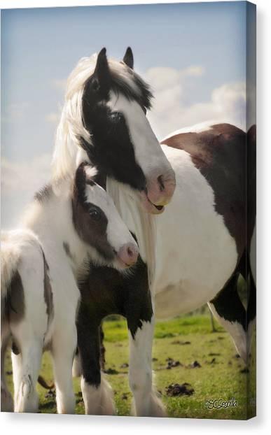 Gypsy Mare And Foal Canvas Print by Elizabeth Vieira