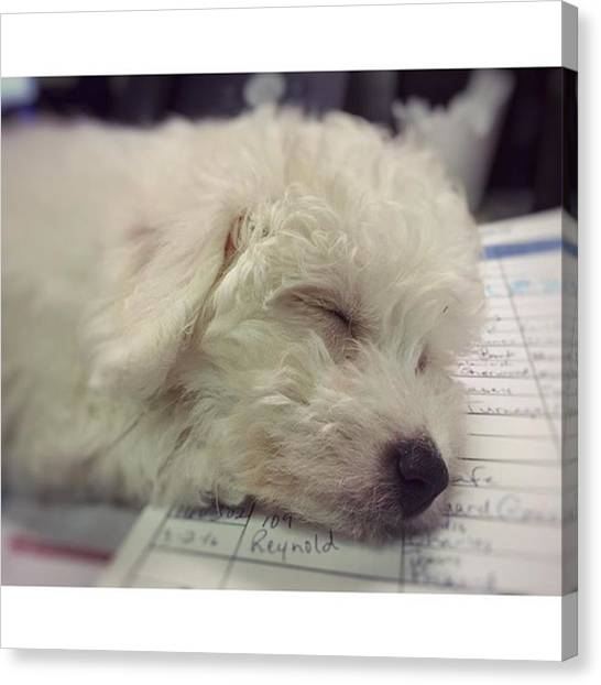 Puppies Canvas Print - Had A Sweet Little Visitor At Work by Joan McCool