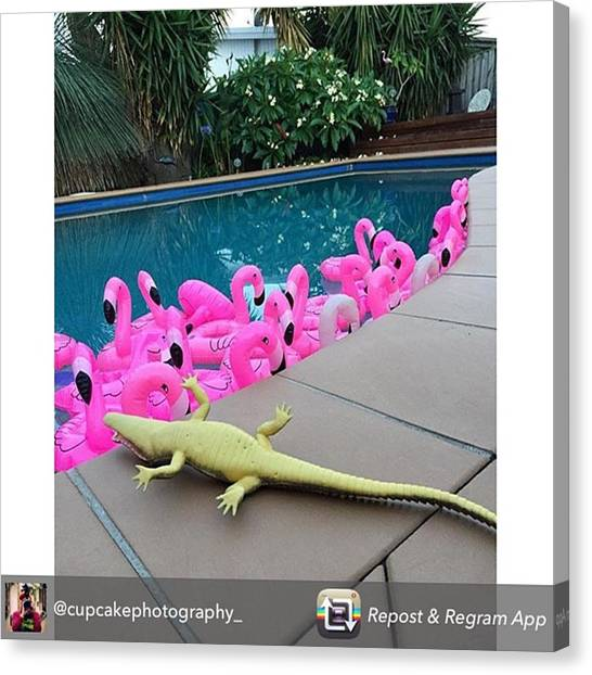 Flamingos Canvas Print - Haha This Made Me Chuckle This by Courtnie Slaney