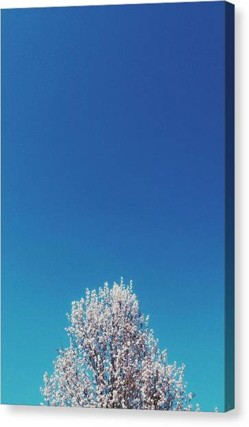 Rebirth Canvas Print - Hail Spring by Ashley Hudson