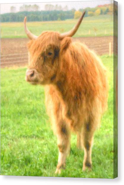 Canvas Print featuring the photograph Hairy Coos by Garvin Hunter