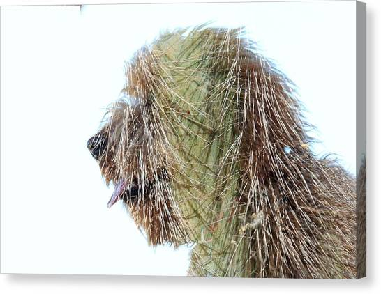 Hairy Doodle Canvas Print