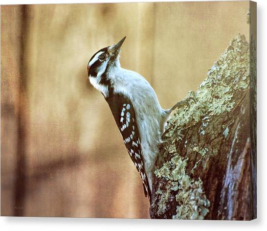 Woodpeckers Canvas Print - Hairy Woodpecker by Bob Orsillo