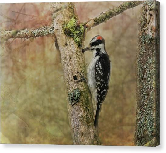 Woodpeckers Canvas Print - Hairy Woodpecker On Old Tree by Susan Capuano