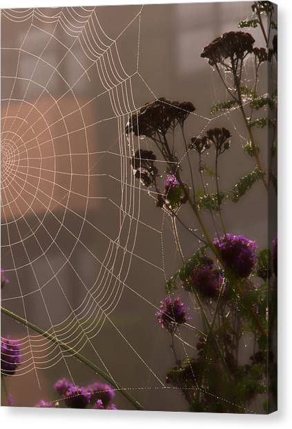 Half A Web Canvas Print