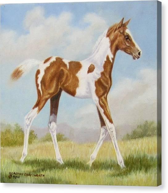 Half Arabian Pinto Filly Canvas Print by Dorothy Coatsworth