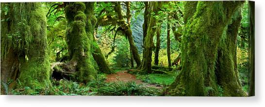 Olympic Peninsula Canvas Print - Hall Of Mosses - Craigbill.com - Open Edition by Craig Bill
