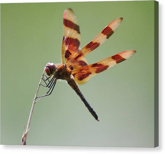 Halloween Pennant Dragonfly Canvas Print by Larry Federman