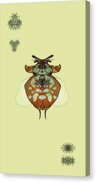 Hammerhead Ladybug Specimen Canvas Print