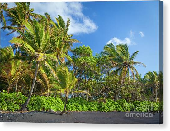 Splashy Canvas Print - Hana Palm Tree Grove by Inge Johnsson