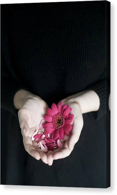 Hands Holding Pink Gerbera Daisies Canvas Print