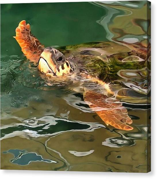 Hands Up For A Plastic Free Ocean Loggerhead Turtle Canvas Print