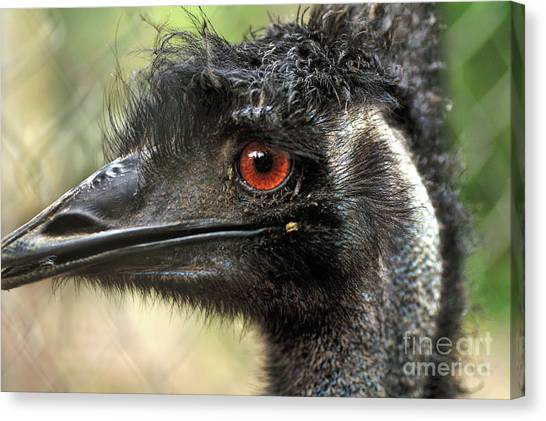 Emus Canvas Print - Handsome by Kaye Menner