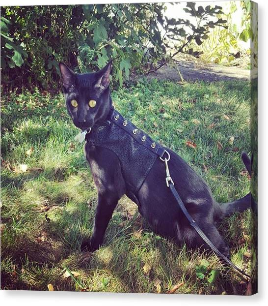 Panthers Canvas Print - Handsome Man Striking A Pose by Sirius Black Adventure Cat