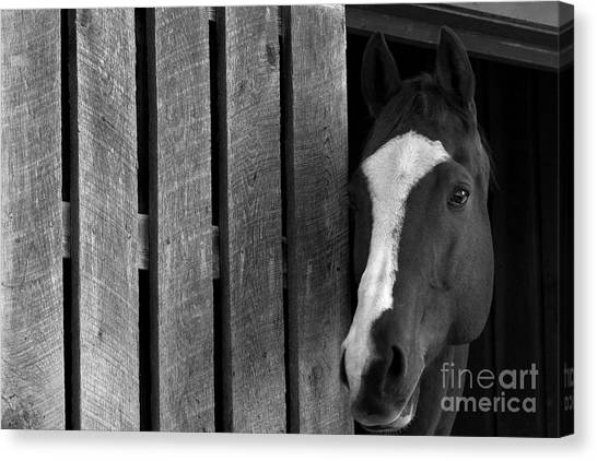 Handsome T Canvas Print