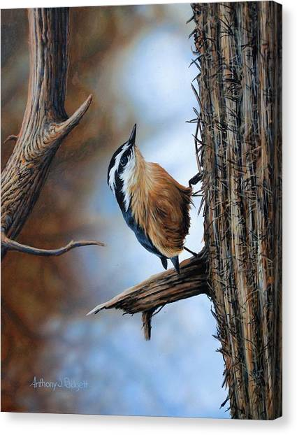 Hangin Out - Nuthatch Canvas Print