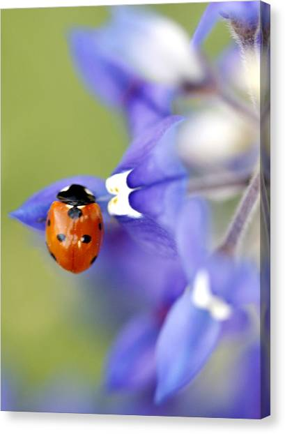 Spring Canvas Print - Hanging On A Petal by Danielle Miller