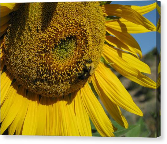Happy Bumble Bee Canvas Print
