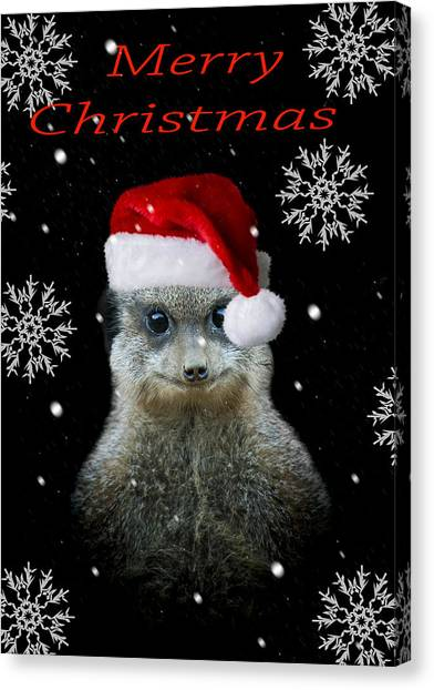 Meerkats Canvas Print - Happy Christmas by Paul Neville