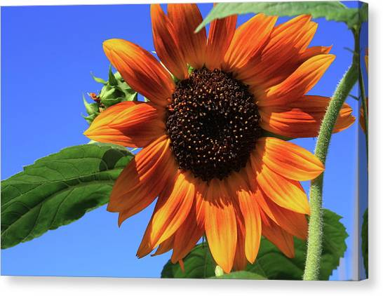Happy Days Of Summer Canvas Print