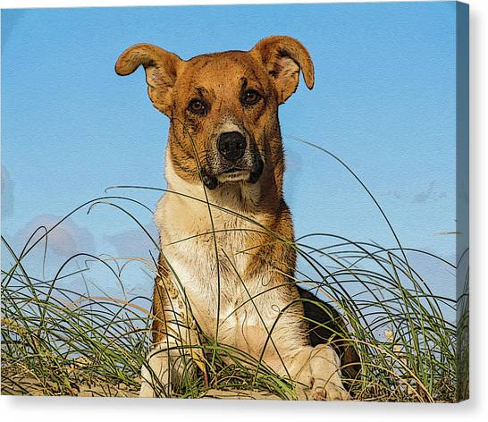 Happy Dog At The Beach Canvas Print
