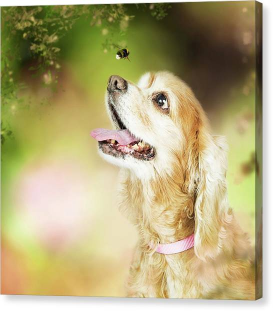 Cocker Spaniels Canvas Print - Happy Dog Outdoors Looking At Bee by Susan Schmitz