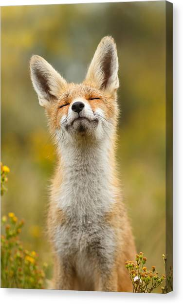 Humour Canvas Print - Happy Fox by Roeselien Raimond
