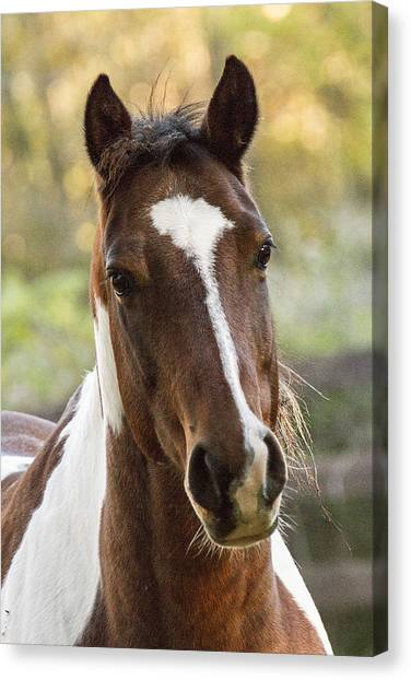 Happy Horse Canvas Print